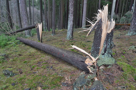 forest damaged by wind, southern Bohemia, Czech Republic