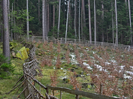 The enclosure protects new trees, reforestation, South Bohemia, Czech Republic Reklamní fotografie