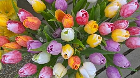 spring flowers ready for planting, South Bohemia, Czech Republic Reklamní fotografie