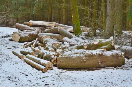 timber ready for transport, South Bohemia, Czech Republic Reklamní fotografie - 98892606
