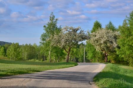 spring landscape, southern Bohemia . Czech Republic Reklamní fotografie - 101072769