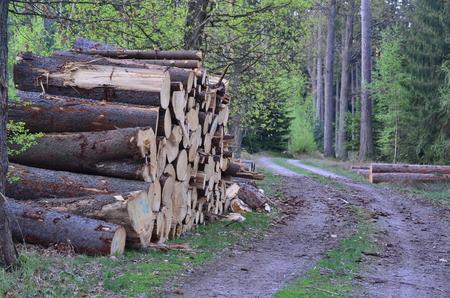 timber ready for transport, South Bohemia, Czech Republic Reklamní fotografie - 101056891