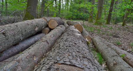 timber ready for transport, South Bohemia, Czech Republic Reklamní fotografie - 101064366