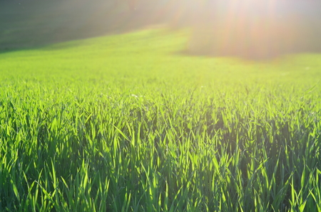 view sown fields , southern Bohemia, Czech Republic Reklamní fotografie - 101072770