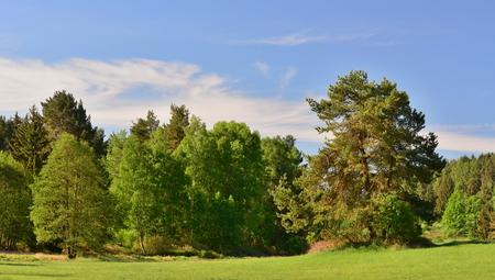 spring landscape, southern Bohemia . Czech Republic Reklamní fotografie - 101515117
