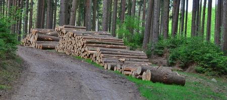 timber ready for transport, South Bohemia, Czech Republic Reklamní fotografie - 101529721