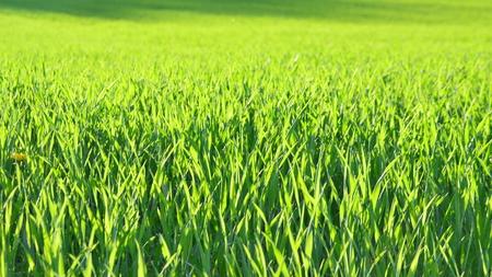 view sown fields , southern Bohemia, Czech Republic Reklamní fotografie - 101524193