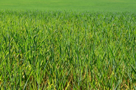 view sown fields , southern Bohemia, Czech Republic Reklamní fotografie - 101934259
