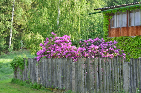 blooming gardens at an old country house, southern Bohemia, Czech Republic