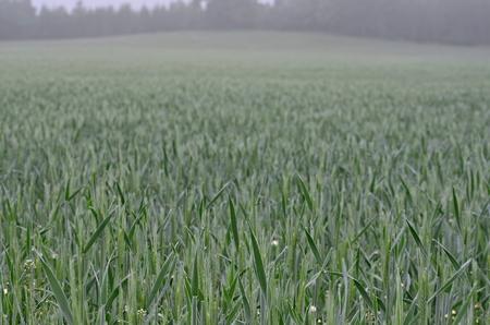 view sown fields , southern Bohemia, Czech Republic Reklamní fotografie - 102473615