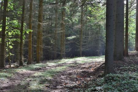 view of forest road, south Bohemia, Czech Republic Reklamní fotografie - 103549293