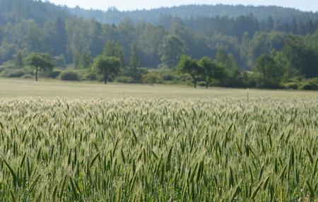 view sown fields , southern Bohemia, Czech Republic Reklamní fotografie - 103896673