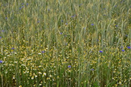 view sown fields , southern Bohemia, Czech Republic Reklamní fotografie - 103896678