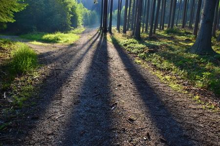 view of forest road, south Bohemia, Czech Republic Reklamní fotografie - 104233208