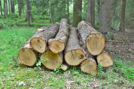 timber ready for transport, South Bohemia, Czech Republic Reklamní fotografie - 104233209