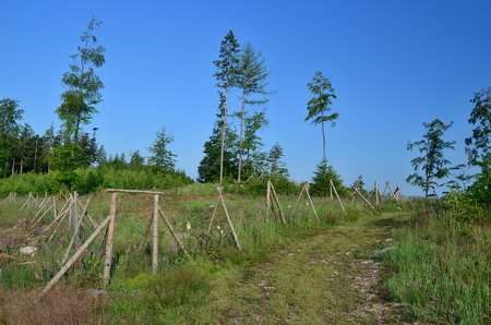 the enclosure protects new trees, reforestation, South Bohemia, Czech Republic Stock Photo