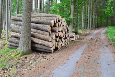 timber ready for transport, South Bohemia, Czech Republic Reklamní fotografie - 104233218