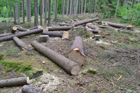 timber ready for transport, South Bohemia, Czech Republic Reklamní fotografie - 104233266