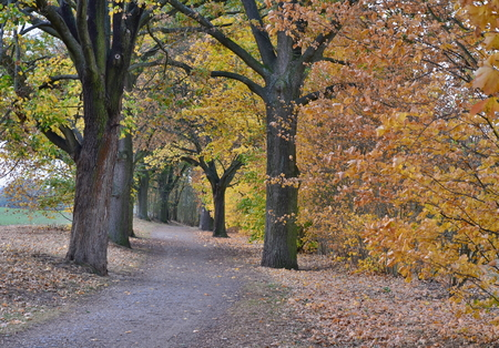 autumn view of the path between the old trees , southern Bohemia , Czech Republic Reklamní fotografie - 110978553