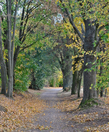 autumn view of the path between the old trees , southern Bohemia , Czech Republic Reklamní fotografie