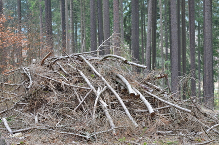 cut tree branches trimmed, South Bohemia, Czech Republic 스톡 콘텐츠
