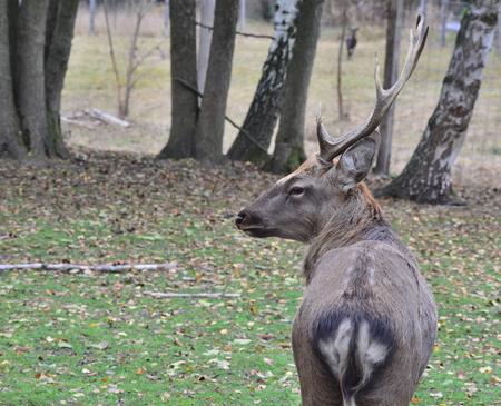Wild forest animals, captive, southern Bohemia, Czech Republic