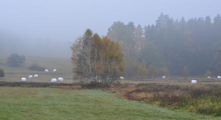 autumn landscape in fog, southern Bohemia . Czech Republic