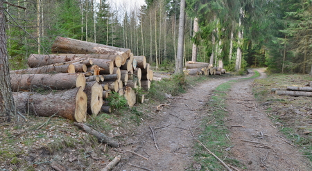 bark beetle-infected trees, timber ready for transport, South Bohemia, Czech Republic Reklamní fotografie - 120716767