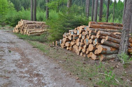 timber ready for transport, South Bohemia, Czech Republic Reklamní fotografie - 125370804