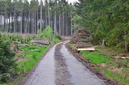 view of forest road, south Bohemia, Czech Republic Reklamní fotografie - 125367913