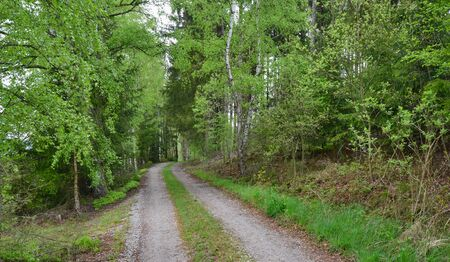 view of forest road, south Bohemia, Czech Republic Reklamní fotografie - 125367915