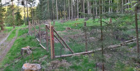 the enclosure protects new trees, reforestation, South Bohemia, Czech Republic 版權商用圖片