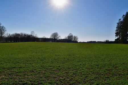 view of spring meadow, southern Bohemia, Czech Republic