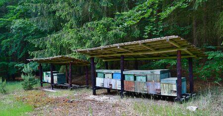 traditional rural beekeeping, South Bohemia, Czech Republic Reklamní fotografie