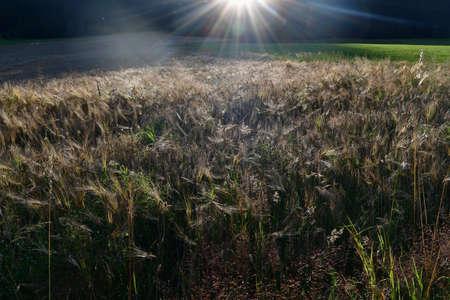 view sown fields, southern Bohemia, Czech Republic Reklamní fotografie