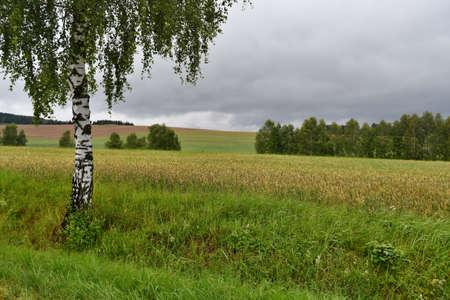 summer landscape, southern Bohemia. Czech Republic