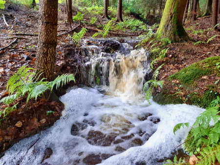 heated water after a summer rain in the forest, South Bohemia, Czech Republic