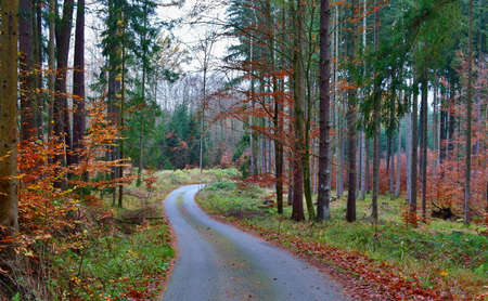 view of autumn forest road, south Bohemia, Czech Republic