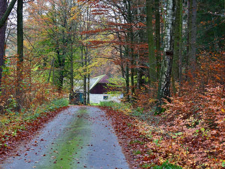 view of autumn forest road, south Bohemia, south Bohemia, Czech Republic