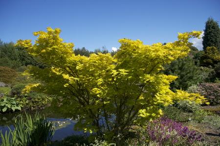 botanical gardens: Botanical Gardens