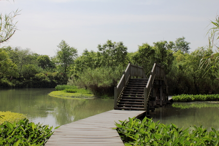 wetland: wetland scenery Stock Photo