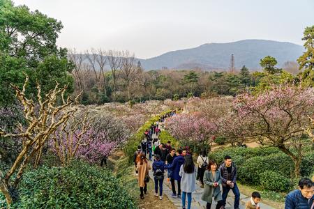 Nanjing Plum Blossom Festival