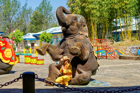 Kunming National Village elephant show Editorial