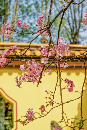 Yunnan Kunming Tanhua Temple