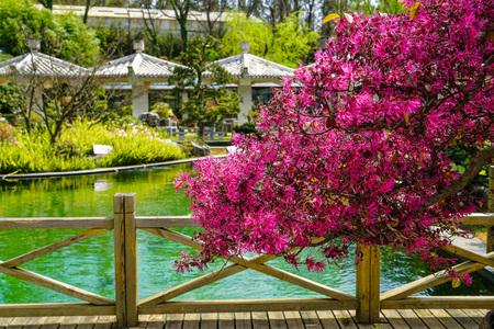 Kunming World Horticultural Exposition Garden