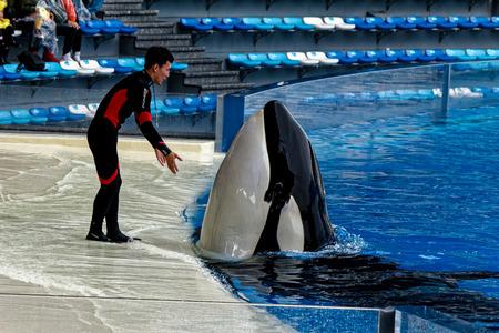 Shanghai Haichang Ocean Park Killer Whale Show