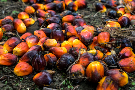 commodities: Palm Seed