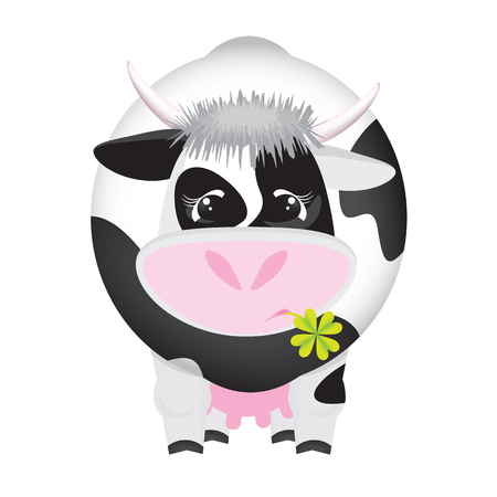 Cute black and white cow with a four-leaf clover in the mouth - funny vector illustration