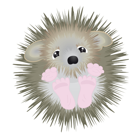 Cute little fluffy hedgehog - funny vector illustration