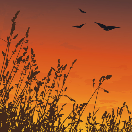 Sunset with silhouette of grass and birds flying on the sky Illustration